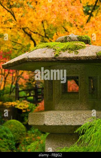 Moss Tea Stock Photos Moss Tea Stock Images Alamy