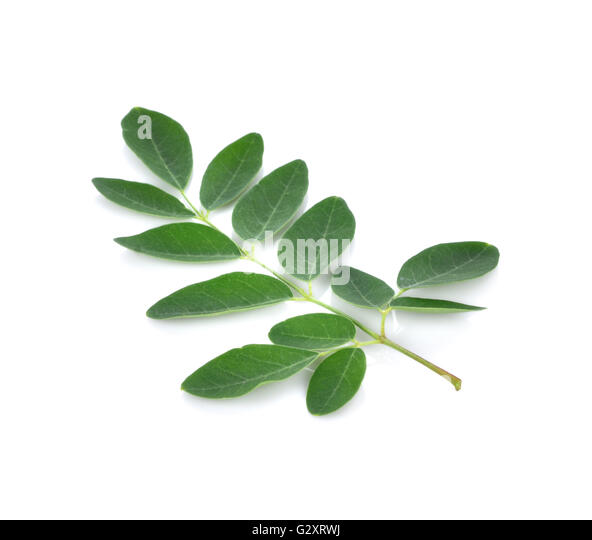 dried malunggay moringa oleifera leaves in [indonesian] mlonge [swahili] malunggay [tagalog] chùm ngây  moringa  leaves are also eaten as a salad or dried and ground to make a.