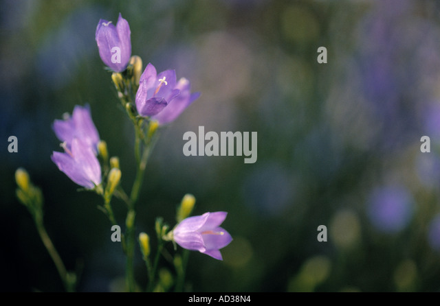 small purple flowers grow in stock photos  small purple flowers, Beautiful flower