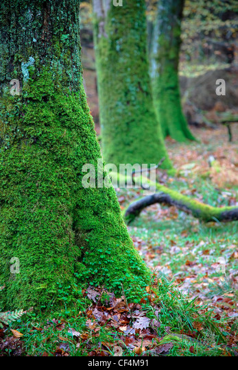 Green moss britain stock photos green moss britain stock for What is a tree trunk covered with 4 letters