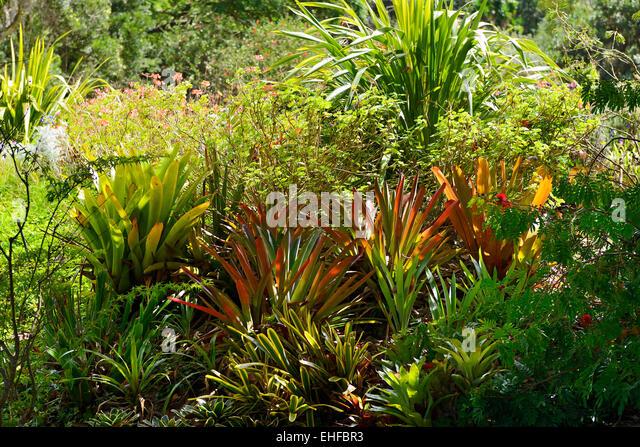 Kula Botanical Garden, Kula, Maui, Hawaii, USA   Stock Image