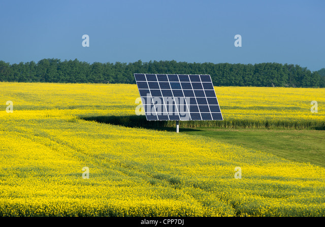 [Image: solar-panels-in-a-field-of-oil-seed-rape...cpp7dj.jpg]