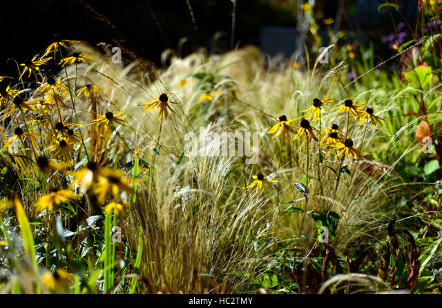 Fade stock photos fade stock images alamy for Grasses planting scheme