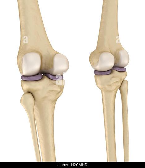 Lateral Patellar Ligament Stock Photos Lateral Patellar Ligament