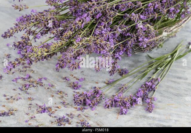 lavendel stock photos lavendel stock images alamy. Black Bedroom Furniture Sets. Home Design Ideas