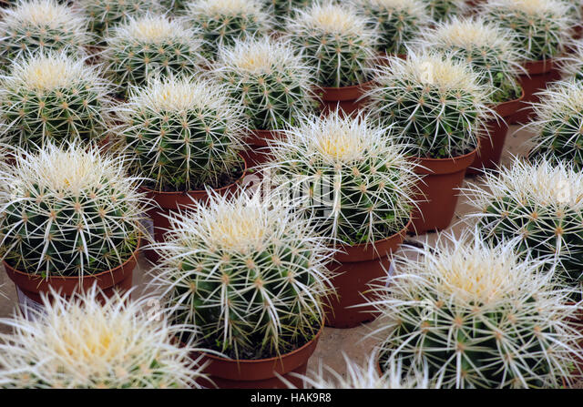 Cacti pots stock photos cacti pots stock images alamy Cactus pots for sale