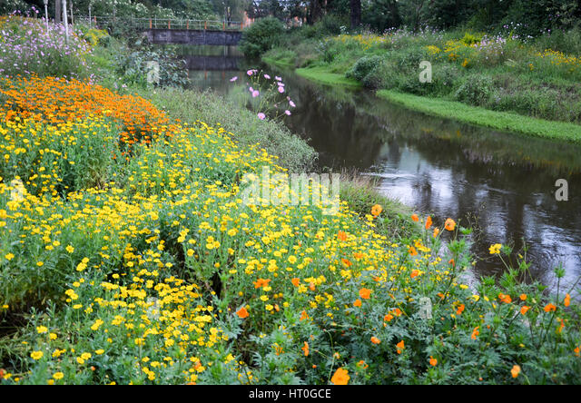 Beautiful Flower Garden With Colourful Flowers At Munnar Kerala India