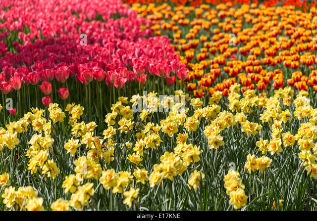 flowers are colorful and all over essay Flowers related titles and fun sayings for scrapbooking layouts, papercrafting   colorful flower  everything's coming up roses  tiptoe through the tulips.