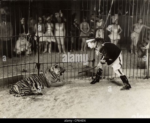 Unique Animal Entertainer Stock Photos  Animal Entertainer Stock Images  With Magnificent Circus Animal Tamer Confronting Tiger  Stock Image With Cute Garden Tools Online Also London Covent Garden In Addition Covent Garden Vegetarian Restaurant And Ladies Garden Fork As Well As Garden Stepping Stones Uk Additionally Beautiful Courtyard Gardens From Alamycom With   Magnificent Animal Entertainer Stock Photos  Animal Entertainer Stock Images  With Cute Circus Animal Tamer Confronting Tiger  Stock Image And Unique Garden Tools Online Also London Covent Garden In Addition Covent Garden Vegetarian Restaurant From Alamycom
