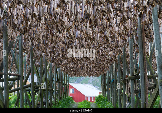Cod fish drying racks traditional stock photos cod fish for Salted cod fish near me