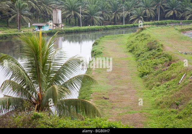 Anaerobic stock photos anaerobic stock images alamy for Design of anaerobic pond