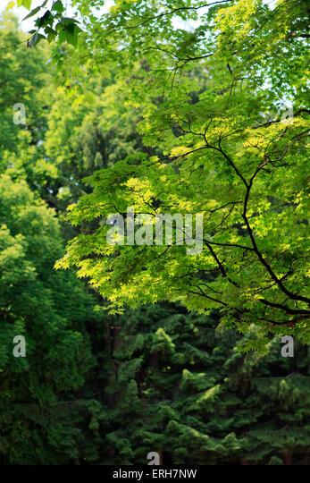 spring green three trees - photo #31