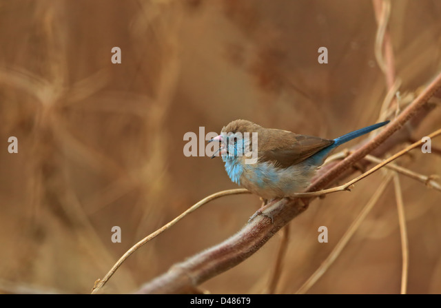 Mole west innen  Bengalus Stock Photos & Bengalus Stock Images - Alamy