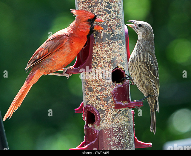 Backyard Birds Stock Photos & Backyard Birds Stock Images ...