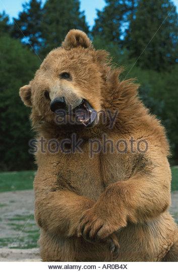 Bear Teeth Stock Photos & Bear Teeth Stock Images - Alamy