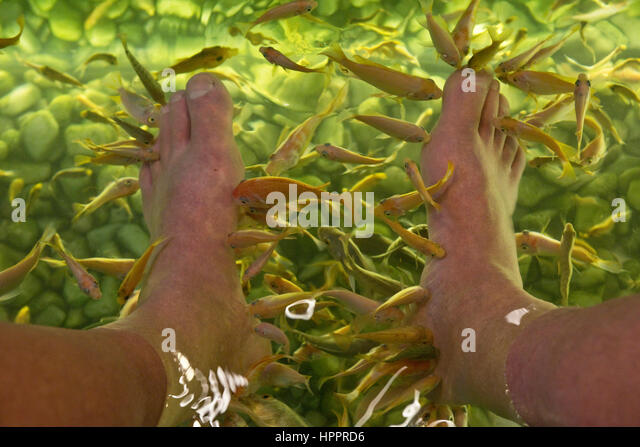 Tickling feet stock photos tickling feet stock images for Fish pedicure near me