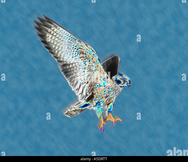 Hawk Graphic Stock Photos & Hawk Graphic Stock Images - Alamy
