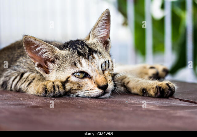Stressed kitten