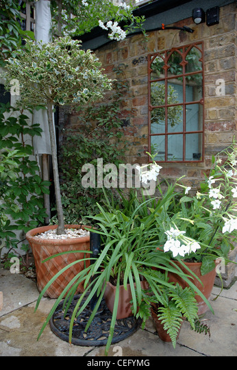 Olive tree pot garden stock photos olive tree pot garden for Small trees for courtyard gardens