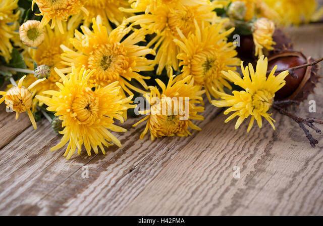Bright Orange Mums Stock Photos & Bright Orange Mums Stock ...