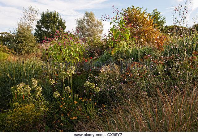 Grasses ornamental stock photos grasses ornamental stock for Ornamental grass border plants