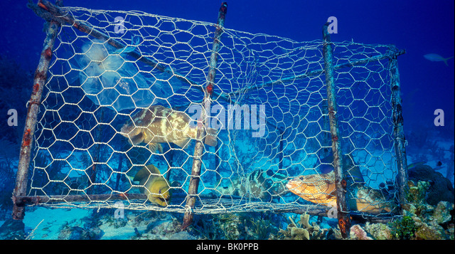 Eel trap stock photos eel trap stock images alamy for Aquarium fish trap