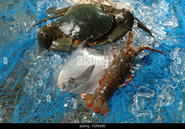 Pomfret fish stock photos pomfret fish stock images alamy for Vegetarian that eats fish