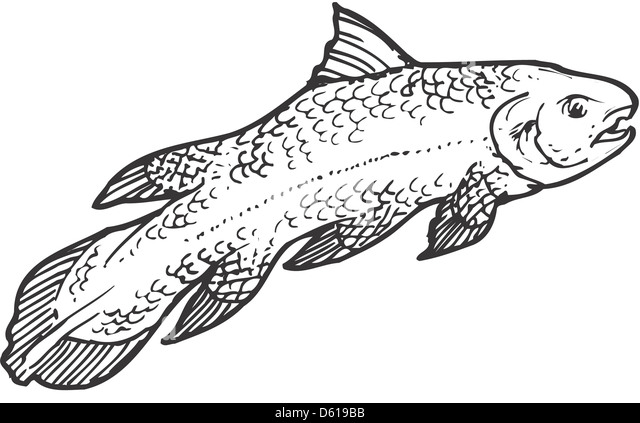 Image Result For Coelacanth Coloring Templates