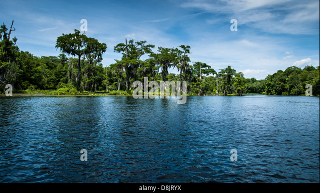 wakulla springs women Werner-boyce salt springs state park  sep 8 2018 - 8:45am edt  some of the america's best and most popular beaches environmental treasures are found in florida state parks, including.