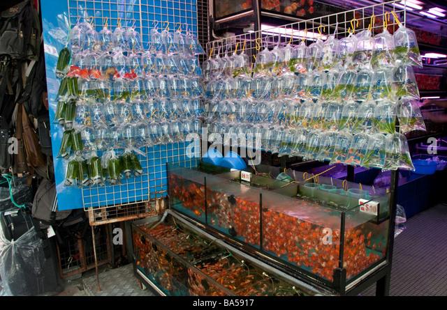 Aquarium store stock photos aquarium store stock images for Pet fish store
