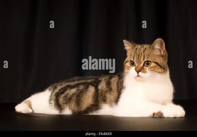 Artistic Dog Cat Photoshoot