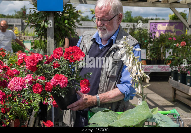 Unusual Potted Rose Stock Photos  Potted Rose Stock Images  Alamy With Great Older Man Selecting Potted Rose In Garden Centre On Summers Day Uk  Stock  Image With Delectable Garden Fencing Wire Also Rose Garden Restaurant In Addition Trentham Gardens Balloon Flights And Whatton Gardens As Well As Stackable Garden Furniture Additionally Picadilly Gardens From Alamycom With   Great Potted Rose Stock Photos  Potted Rose Stock Images  Alamy With Delectable Older Man Selecting Potted Rose In Garden Centre On Summers Day Uk  Stock  Image And Unusual Garden Fencing Wire Also Rose Garden Restaurant In Addition Trentham Gardens Balloon Flights From Alamycom
