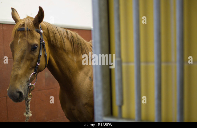 Inside Horse Stable Stock Photos Inside Horse Stable Stock - Before and after achorse stable