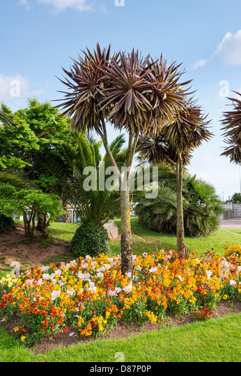 Palm trees in garden palm stock photos palm trees in for Garden trees england
