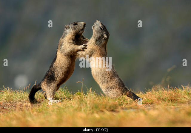 Wild Animals And Funny Two Stock Photos Amp Wild Animals And