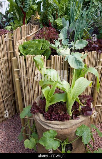 Grow Bag Stock Photos Grow Bag Stock Images Alamy