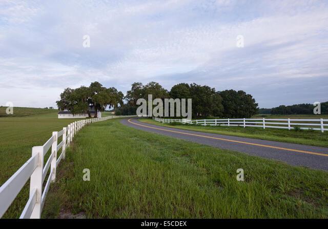 Ocala Florida Usa Countryside Farmland Stock Photos: usa countryside pictures