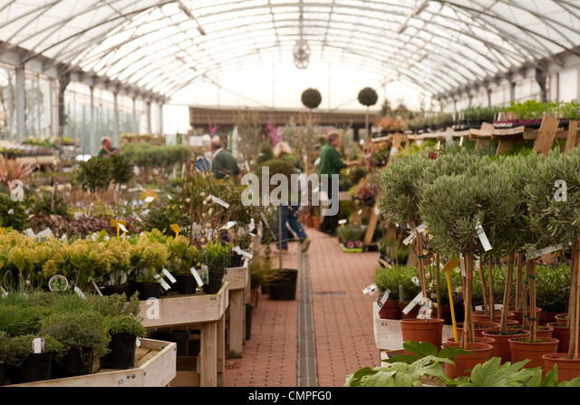 Picturesque Garden Centre Uk Stock Photos  Garden Centre Uk Stock Images  Alamy With Licious People Shopping At A Garden Centre Cambridgeshire Uk  Stock Image With Delectable Recruitment Agencies Covent Garden Also Garden Nursery Enfield In Addition New Garden Ideas And Dry Garden Plants As Well As Travel Inn London Covent Garden Additionally Nyc Community Gardens From Alamycom With   Licious Garden Centre Uk Stock Photos  Garden Centre Uk Stock Images  Alamy With Delectable People Shopping At A Garden Centre Cambridgeshire Uk  Stock Image And Picturesque Recruitment Agencies Covent Garden Also Garden Nursery Enfield In Addition New Garden Ideas From Alamycom