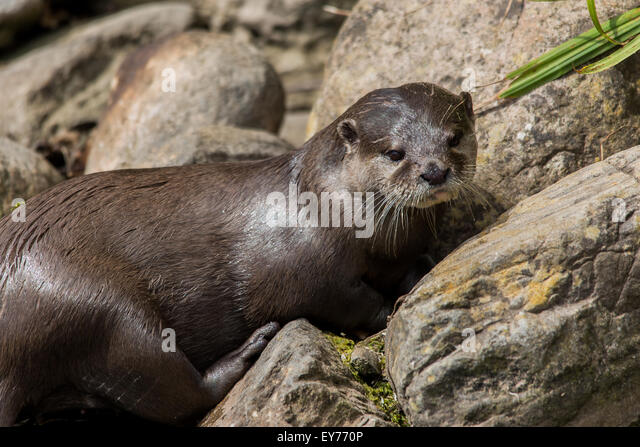 otter rock asian personals Explore flying dutchman winery's board otter rock on pinterest | see more ideas about oregon coast, otter and otters.