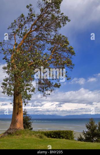 Tree Rat Bc Vancouver Island