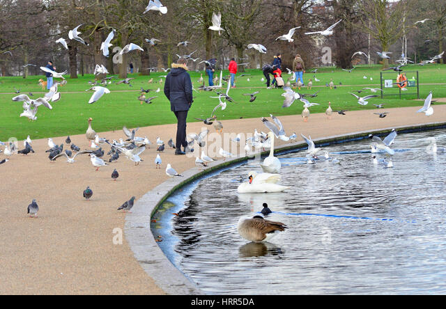 Fascinating Kensington Gardens Winter London Stock Photos  Kensington Gardens  With Lovable The Round Pond In Kensington Gardens  Stock Image With Beautiful Garden Storage Bins Also Ikea Garden Box In Addition Alexander Garden Furniture And Wyvale Garden Centre As Well As Gardens Without Lawns Additionally Garden Pharmacy From Alamycom With   Lovable Kensington Gardens Winter London Stock Photos  Kensington Gardens  With Beautiful The Round Pond In Kensington Gardens  Stock Image And Fascinating Garden Storage Bins Also Ikea Garden Box In Addition Alexander Garden Furniture From Alamycom
