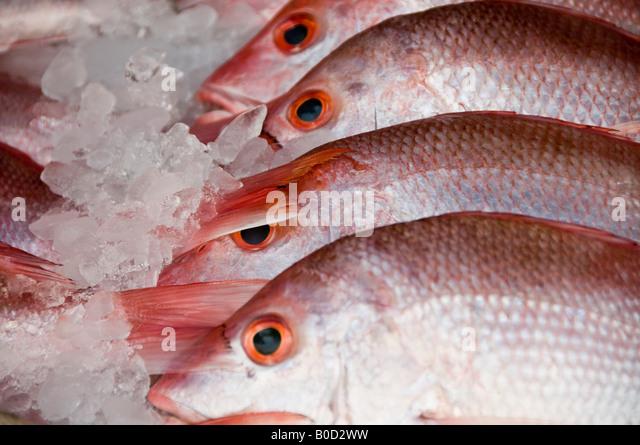 Huachinango stock photos huachinango stock images alamy for Fish in spanish