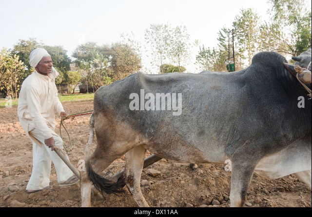 Indian farmer Standing...