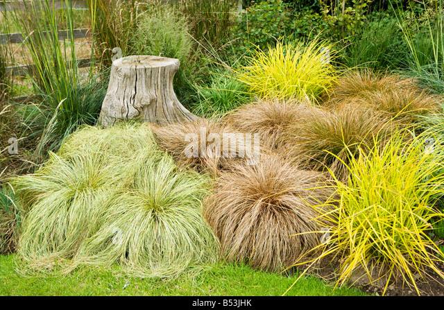 Carex Stock Photos & Carex Stock Images - Alamy