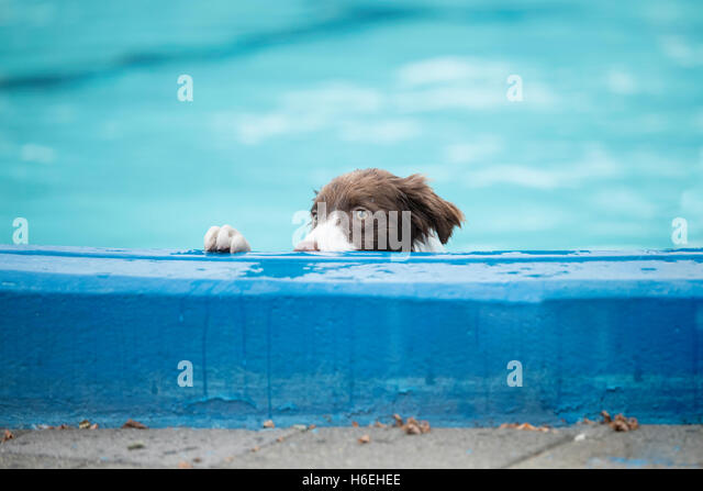 Dripping Nose Stock Photos Dripping Nose Stock Images Alamy