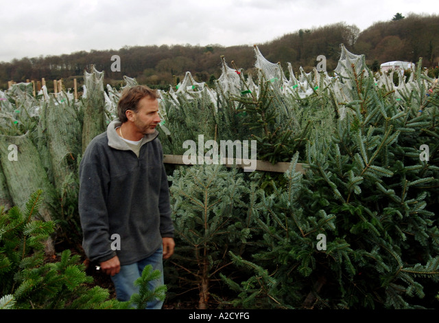Chesham Christmas Tree Farm in Chesham a farmstyle village outside London.  - Stock Image - Christmas Tree In Shop In Stock Photos & Christmas Tree In Shop In