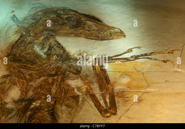China Fossil Stock Photos & China Fossil Stock Images - Alamy