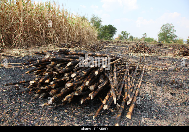 Cane Fire Stock Photos Amp Cane Fire Stock Images Alamy