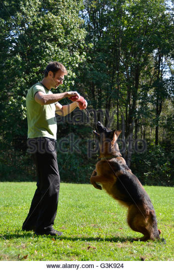K Police Training Dog Moves With Man