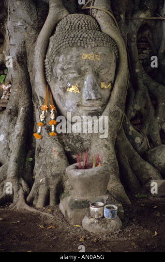 Thailand ayutthaya sacred tree stock photos thailand for Ayuttaya thai cuisine